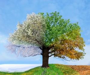Ein Baum, der die vier Jahreszeiten zeigt.