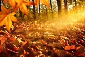 Lichtstrahlen auf Waldboden im Herbst